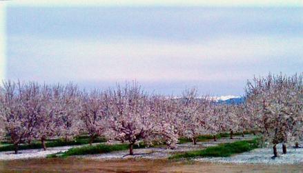Ag scene spring 2010