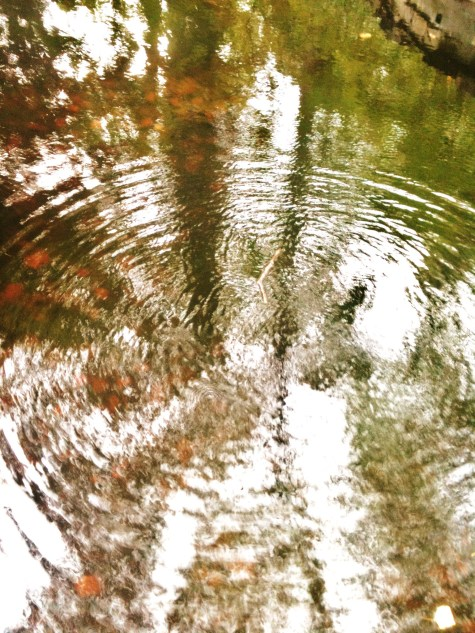 Ripples of Life