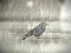 rain-on-bird4