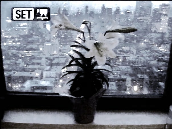 lilies-lora-mitchell (2)