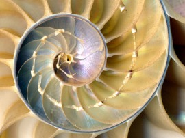 nautilus_shell_cross_section