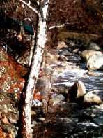 three rivers canvas