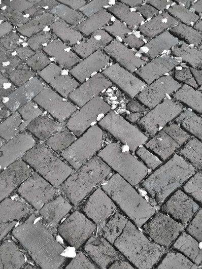 brick and dead leaves