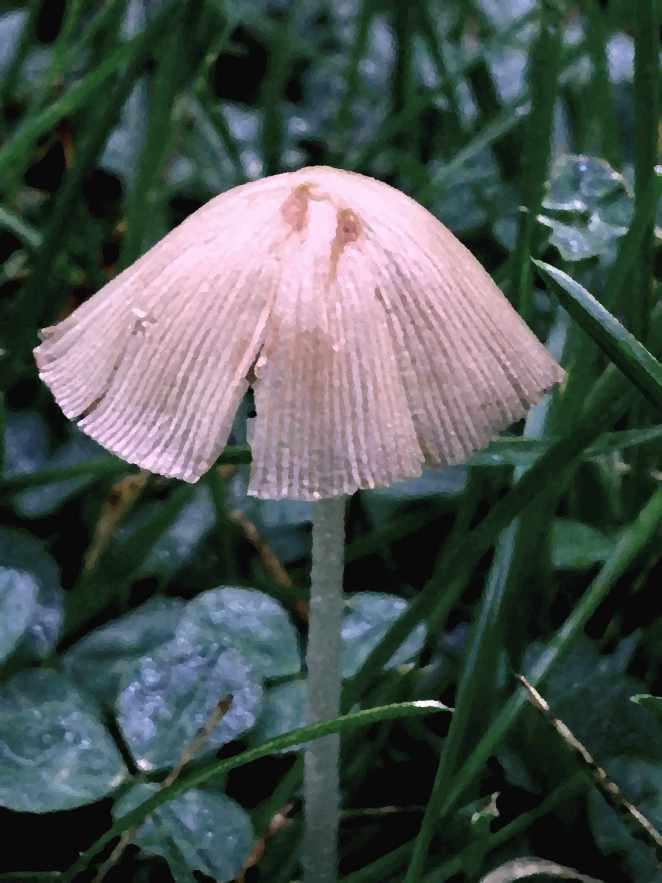 painted mushroom