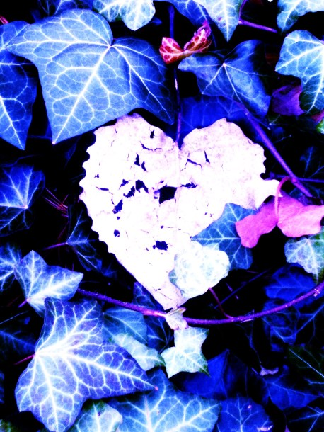 heart in ivy