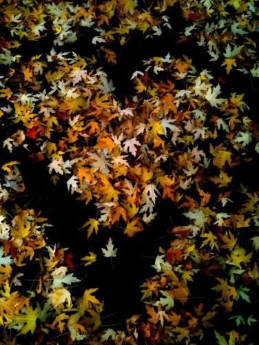 fall leaves heart