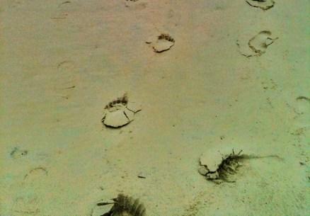 sandy path 4