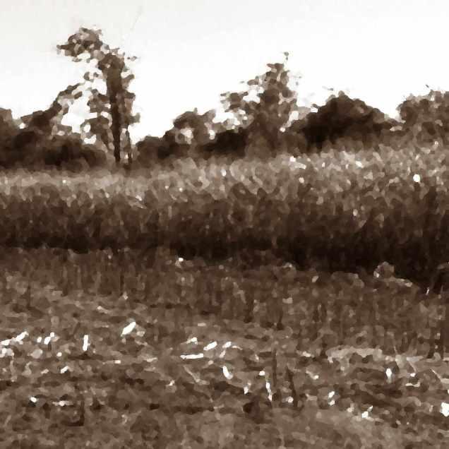 Empty Fields