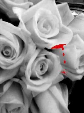 white bloody rose