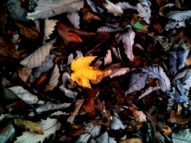leaf layers