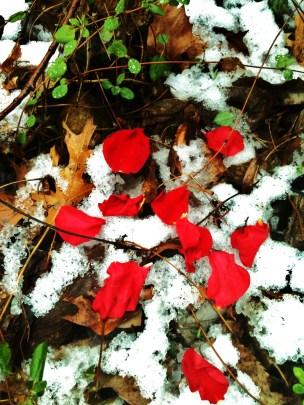 petals in the snow