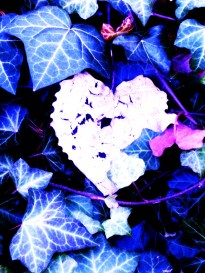 heart-in-ivy.jpg
