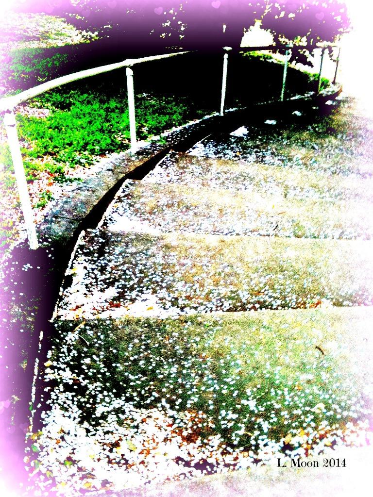 petal walk