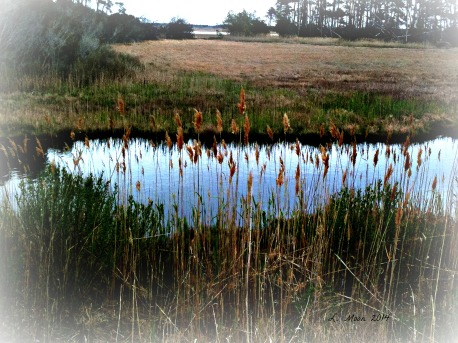 marsh reflection
