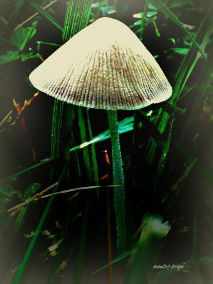 mushroom morn