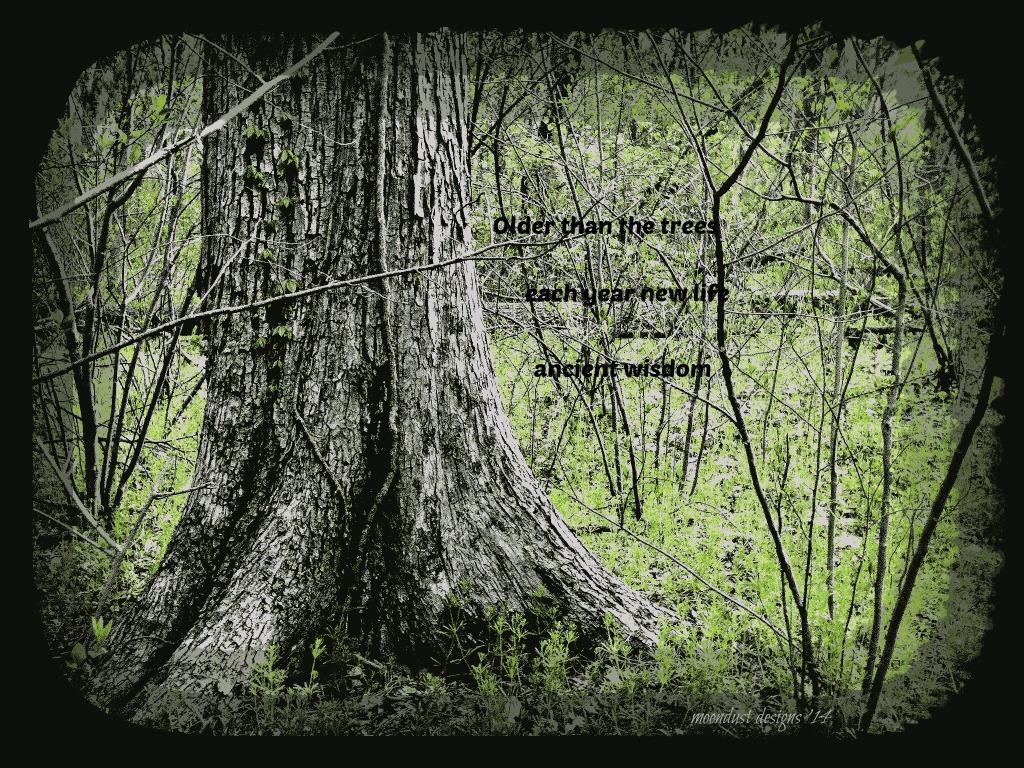 tree haiku