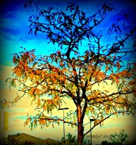fall transformation