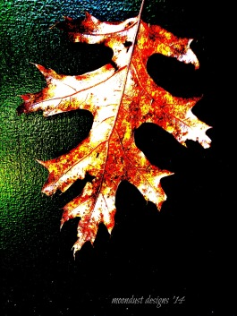 one fall leaf