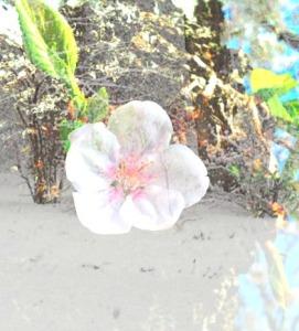 blossom winter