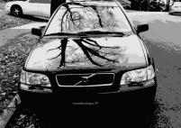 tree shadow on car