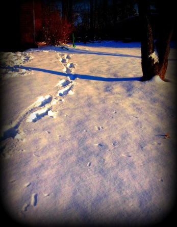 winter footsteps