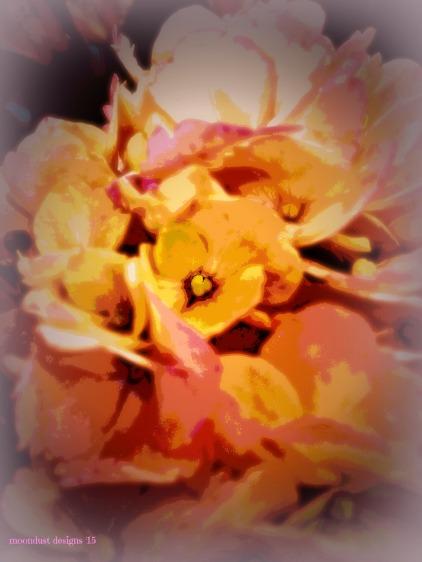 heart hydrangea