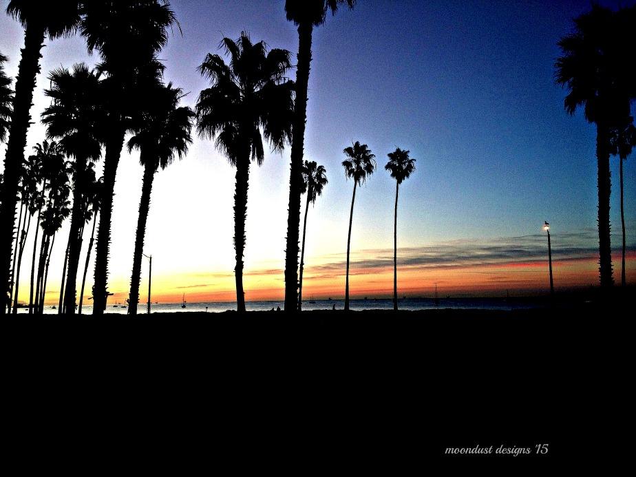 palm dawn
