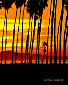 palm sun rise
