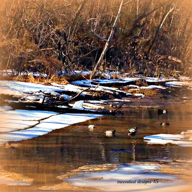 thaw and ducks