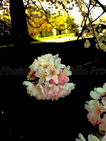 cherry bouquet