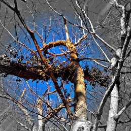 tree and vine