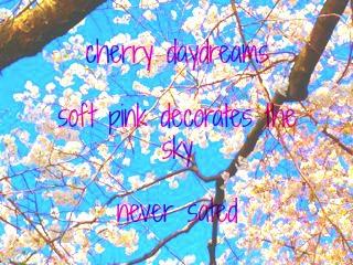 cherry  haiku