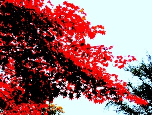 fall fire leaves