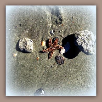 lone starfish