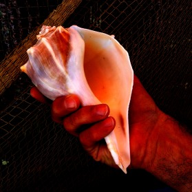 conch in hand