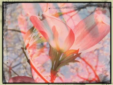 framed hand with flower