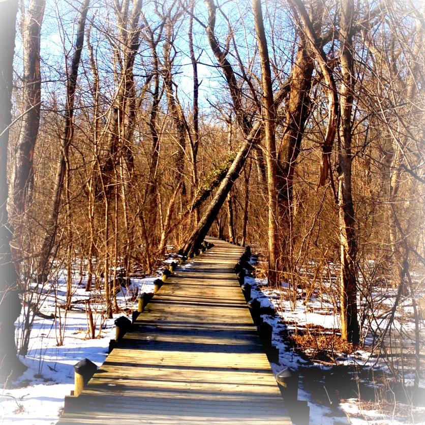 marsh walkway