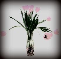 fading-tulips