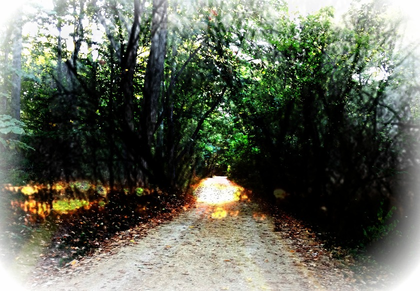 misty-path